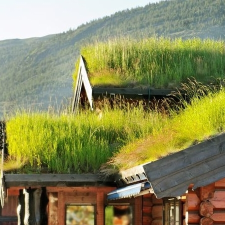 A Green Roof With Vegetation.